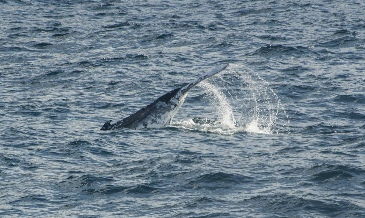 Whale Watching off Sydney